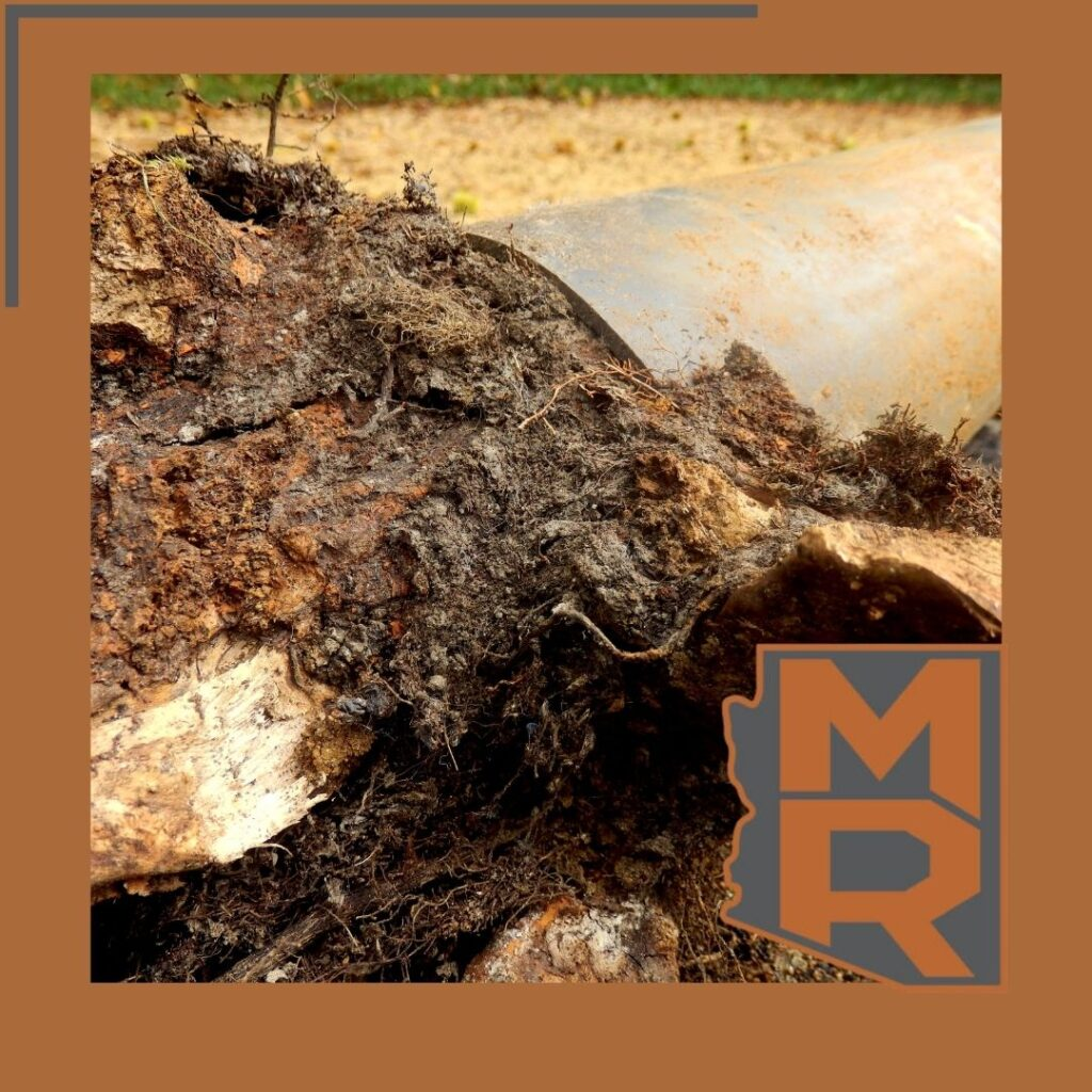 Tree Roots - Master Rooter A